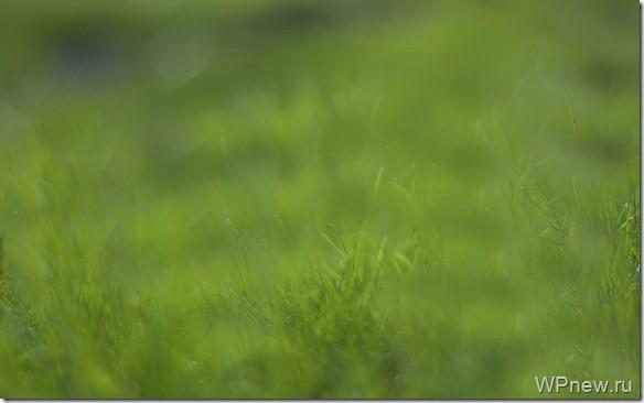Вот так я видел траву до операции