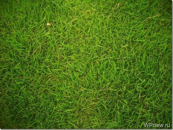 Вот так я вижу сейчас траву